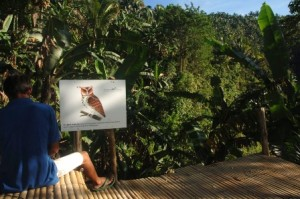 Giant Scops Owl Sign