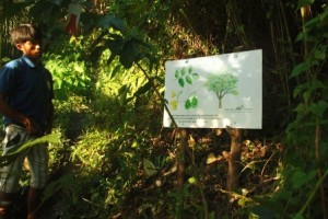 Narra Tree Sign